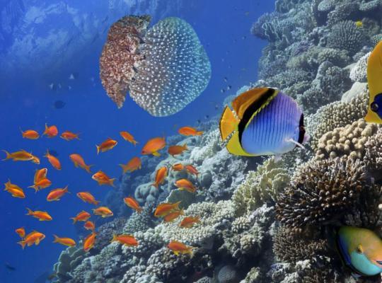 Koraalriffen in Belize